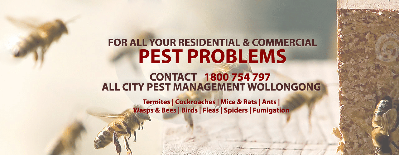 Pest control services wollongong