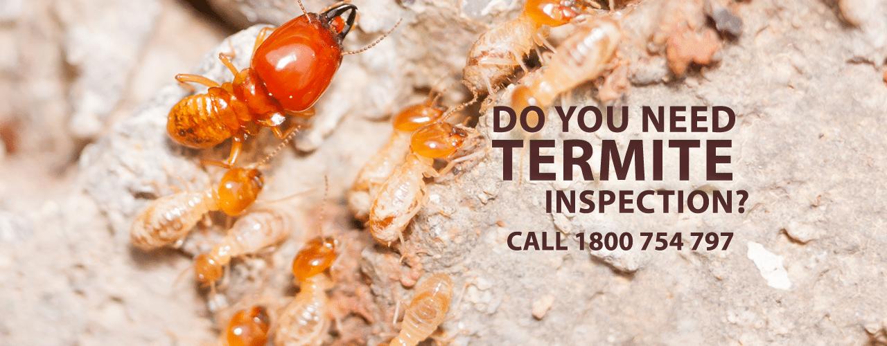 Termite Control Wollongong