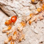termite-inspection-treatment-wollongong
