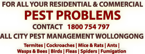 wollongong pest control residential commercial